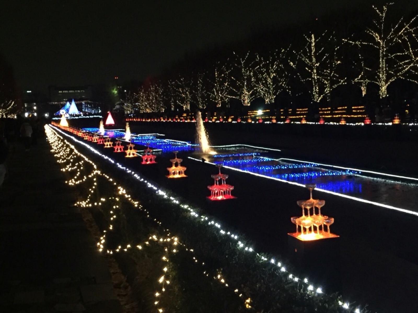 何度でも行きたい!昭和記念公園のイルミネーションの魅力